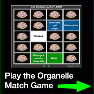 Organelle Match Game