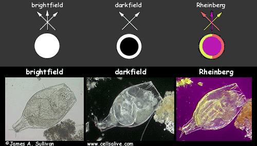 Darkfield and Rheinberg