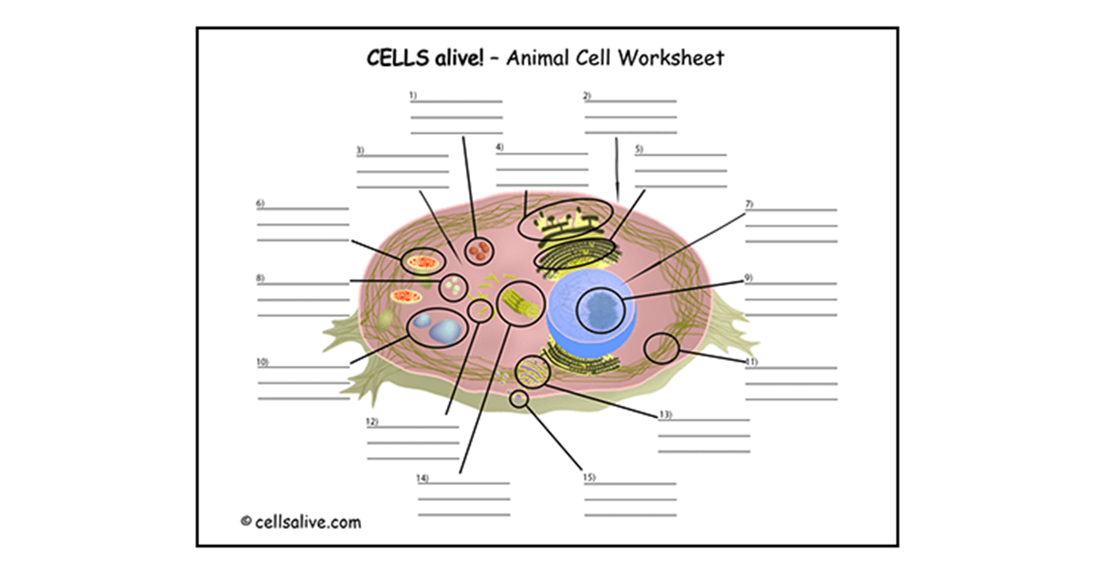 CELLS alive Study Aids – Plant and Animal Cell Worksheet